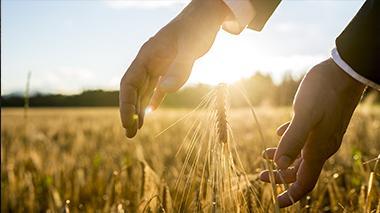 agricoltura1-3
