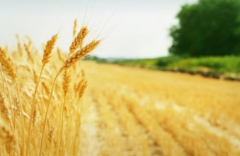 agricoltura2